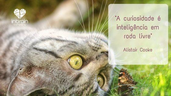Curiosidade e inteligência