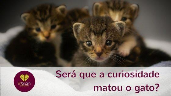 Será que a curiosidade matou o gato?